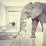 The Elephant In The Room – Cancer