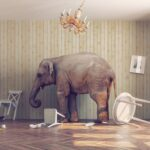 Elephant in the Room – Part Two